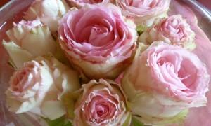 Rosenblüten-1100271